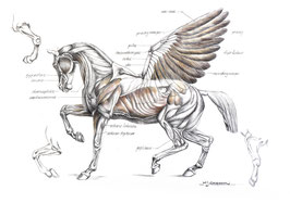 Creatus Hippocrene - Oh, Pegasus, your pasture awaits