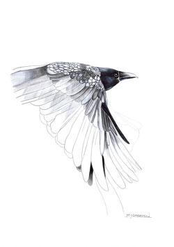 Raven Madness