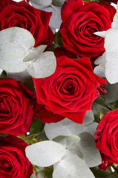 12 rote Rosen garniert