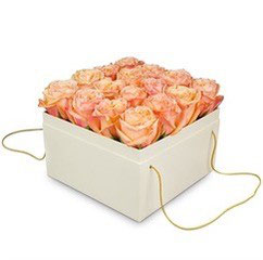 Apricot Rosen in weisser Box
