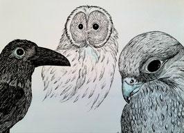 """""""Birds"""" von Monika Blum"""