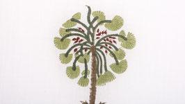 Grands palmiers vert brun