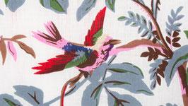 Oiseaux de paradis dans une nature vierge