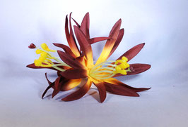 12 cm Spider-Lily-Haarclip mocca