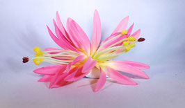12 cm Spider-Lily-Haarclip rosa