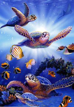 Karte Schildkröten im Licht