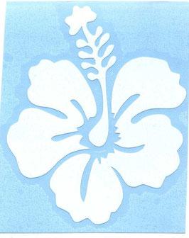 Hibiskus 7,5 cm