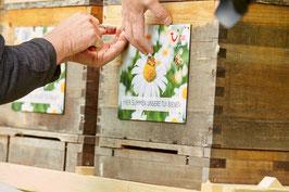 Bienen Leasing