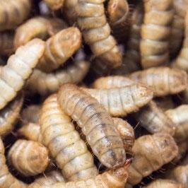 Calciumwormen 250 gram