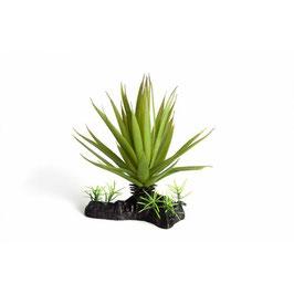Nepplant dunne vetplant