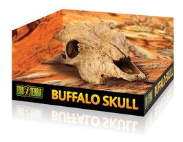 Schedel buffel