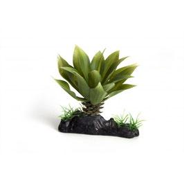 Nepplant dikke vetplant