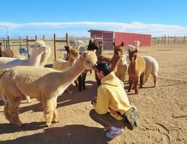 大人気!アルパカ牧場とテントロック国立モニュメントツアー