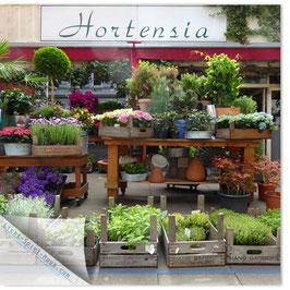 StadtSicht Hamburg 026a, Hortensia 001
