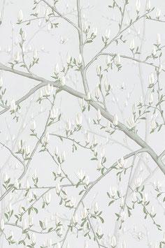 Magnolia Witte bloem (4)