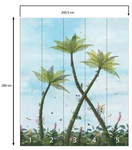 Boomvarens (Dicksonia Tree Ferns)