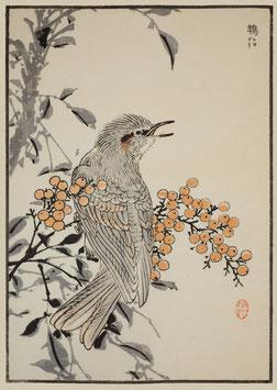 Vogel nach einem Motiv von Kono Bairei (1844 –1895) KB11