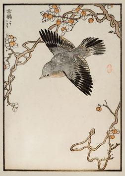 Vogel nach einem Motiv von Kono Bairei (1844 –1895) KB05