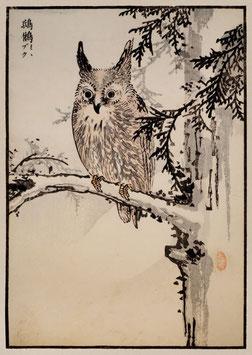 Eule nach einem Motiv von Kono Bairei (1844 –1895) KB07