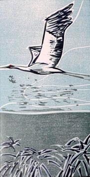 Kranich fliegend