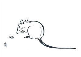 »Ratte«