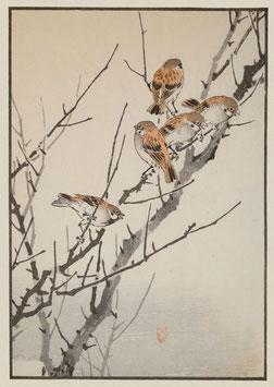 Spatzen nach einem Motiv von Kono Bairei (1844 –1895) KB09