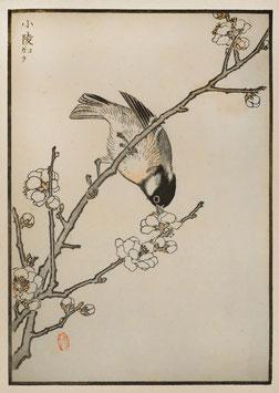 Vogel nach einem Motiv von Kono Bairei (1844 –1895) KB08