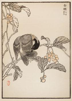 Vogel nach einem Motiv von Kono Bairei (1844 –1895) KB10