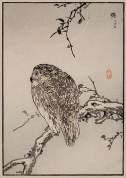Käuzchen nach einem Motiv von Kono Bairei (1844 –1895) KB01