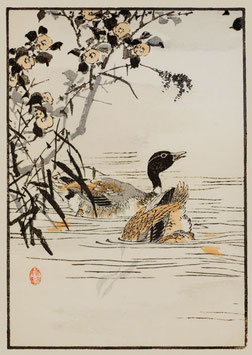 Enten nach einem Motiv von Kono Bairei (1844 –1895) KB13