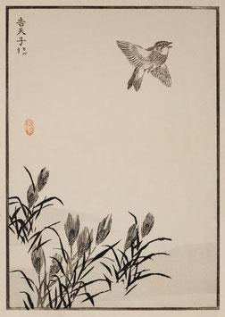 Vogel nach einem Motiv von Kono Bairei (1844 –1895) KB02