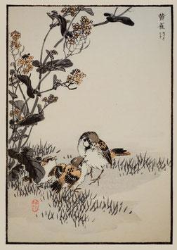 Fütternder Spatz nach einem Motiv von Kono Bairei (1844 –1895) KB12
