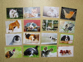 16 Postkarten HUNDE & KATZEN