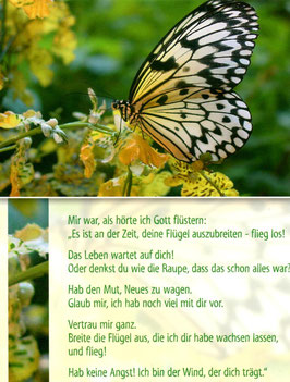 Schmetterling - breite deine Flügel aus