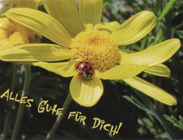 10 x Postkarte Alles Gute für dich