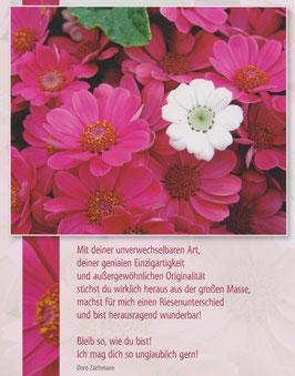 Große Postkarte: Eine weiße unter roten Blüten  - Du stichst heraus