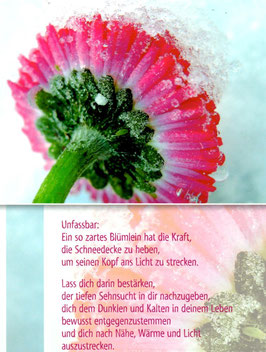 Postkarte Gänseblümchen - Unfassbar
