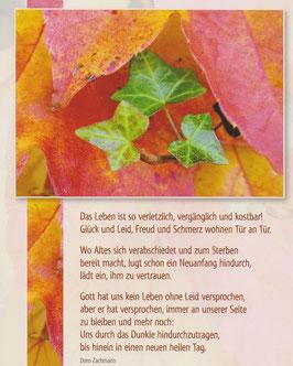 Große Postkarte: Efeu - Das Leben ist so verletzlich