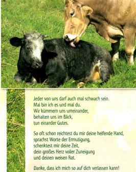 Kühe - wir kümmern uns umeinander