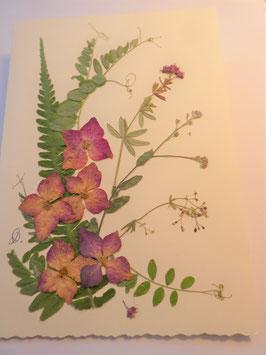 """3er Set Blüten-Faltkarten """"Hortensie pink"""" BBP6"""