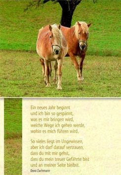 Postkarte Pferde - treuer Gefährte