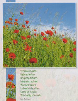 Große Postkarte: Mohnwiese - Sonne im Herzen