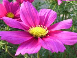 Foto-Kartenset Blumen