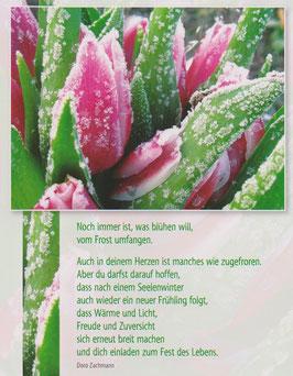 Postkarte Gefrorene Tulpen - nach einem Seelenwinter folgt ein neuer Frühling