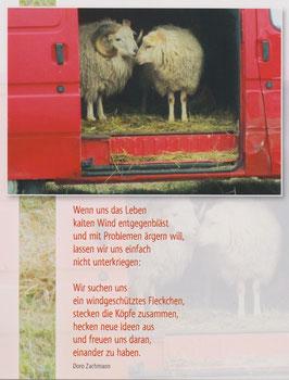Große Postkarte: Schafe im VW-Bus - Wir lassen uns nicht unterkriegen