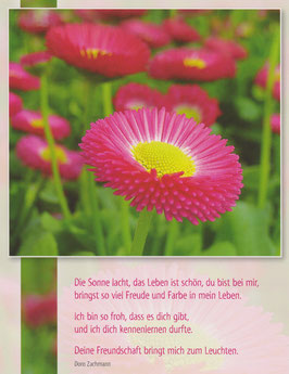Große Postkarte: Pinke Gänseblümchen - Das Leben ist schön