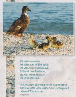 Große Postkarte: Entenmutter - Schutz und Geborgenheit unter Gottes Flügeln