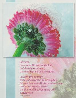 Große Postkarten im 7er Set JAHRESBEGINN und FRÜHLING
