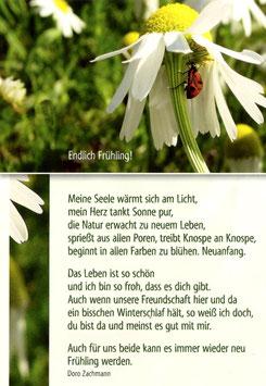 Postkarte Käfer unter Kamillenblüte - Endlich Frühling