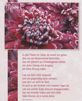 Große Postkarte: Gefrorene Dahlie - Herzenswinter steht bevor